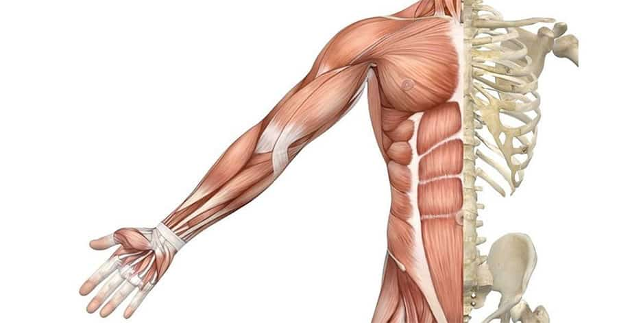 Stronger Muscles and Bones